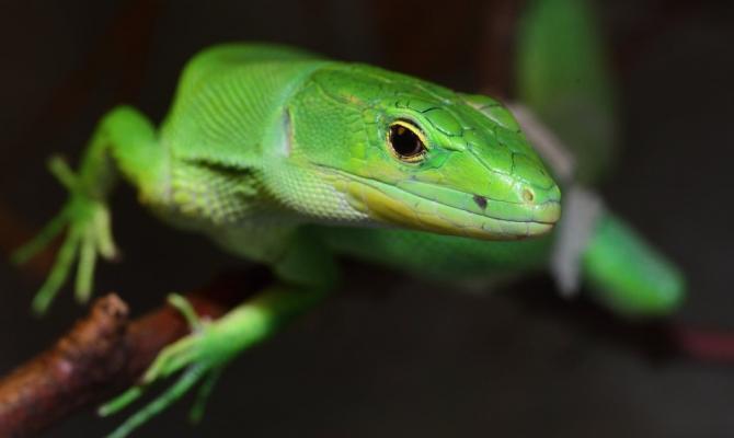 Zoo Olomouc otevřela nová terária