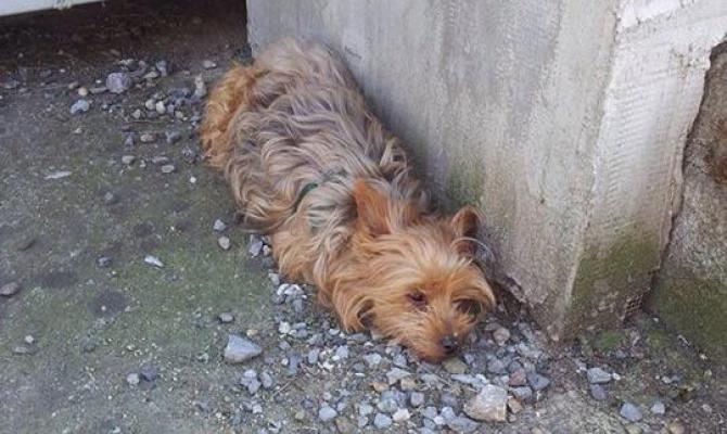 Střílel po psovi ze vzduchovky. Jorkšírek na následky zranění uhynul