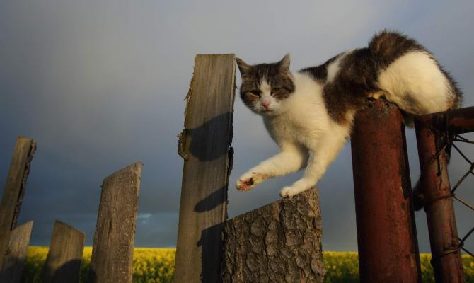 Kastrování koček podporuje město Prostějov již řadu let, říká náměstkyně Sokolová